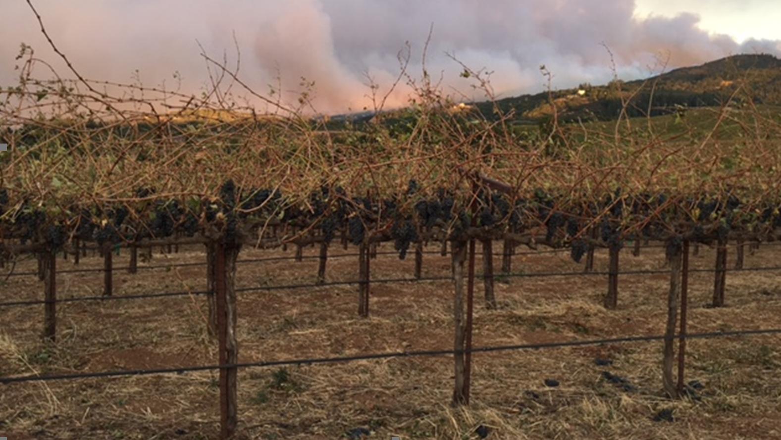 Wine Supply Chain